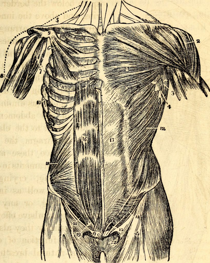 Elementary-anatomy-and-physiology
